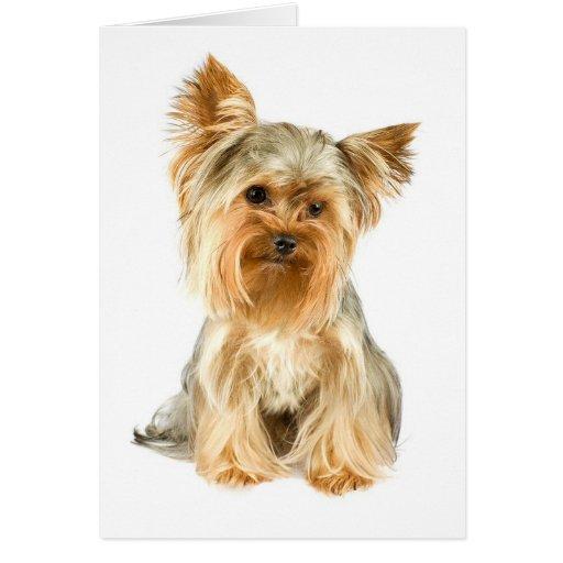 Yorkie Puppy Greeting Card