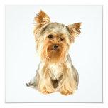 """Yorkie Puppy Invitations 5.25"""" Square Invitation Card"""