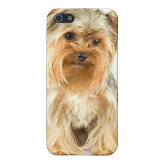 Yorkie Puppy iPhone 4 Case