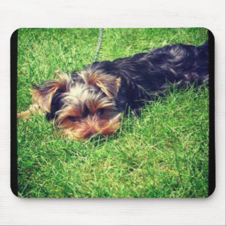 yorkie puppy love mouse pad