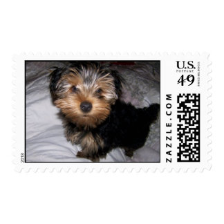 Yorkie Puppy Stamps