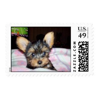 Yorkie Puppy Postage Stamp