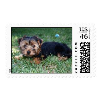 Yorkie puppy stamp