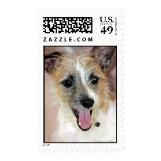 Yorkie/sellos de Russell Terrier del párroco