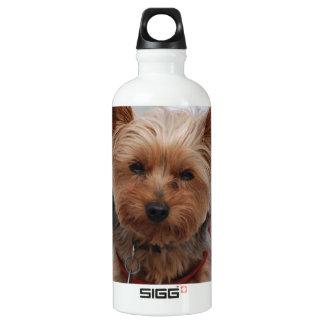 Yorkie  SIGG traveler 0.6L water bottle