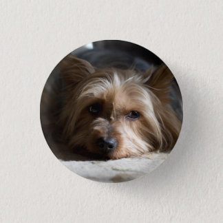Yorkie / silky/ yorky/ yorkshire terrier button