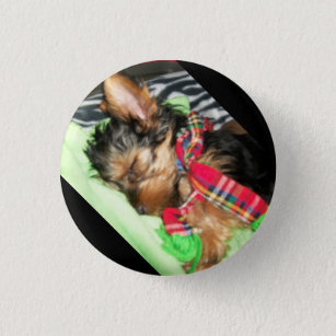 Yorkie Snuggle Button