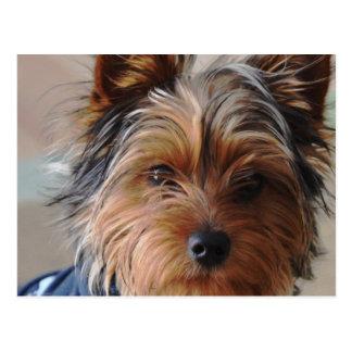 Yorkie Terrier  Postcard