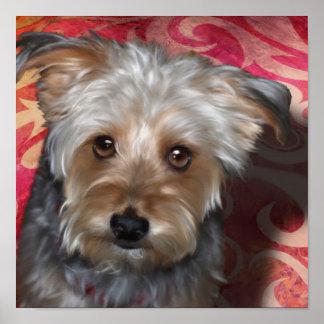 Yorkie Terrier Poster