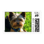 yorkie timbres postales