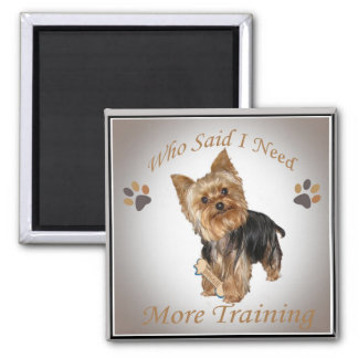 Yorkie Who Said I Need More Training Magnets