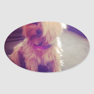 Yorkie with a Combover Oval Sticker