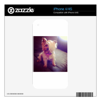 Yorkie with a Combover iPhone 4 Skins