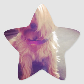 Yorkie with a Combover Star Sticker