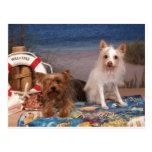 Yorkie y tiempo de la playa de los amigos tarjetas postales
