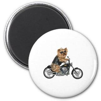 Yorkie Yorkshire Terrier Biker Magnet