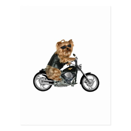 Yorkie Yorkshire Terrier Biker Postcard