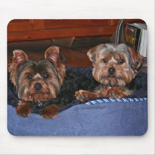 Yorkies - buddies mouse mat