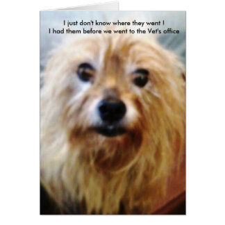 Yorkies,funny pet cards