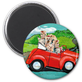 Yorkies in Red Convertible Magnet