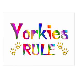 Yorkies Rule Post Card