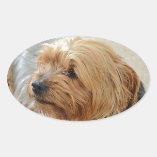 Yorkkshire Terrier Jake Oval Sticker