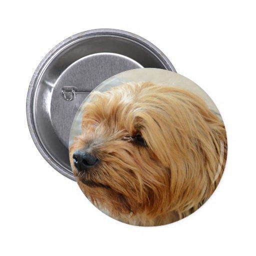 Yorkkshire Terrier Jake Pin Redondo 5 Cm