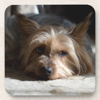 yorkshire / Silky terrier coasters - set of 6