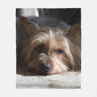 yorkshire / Silky terrier fleece blanket