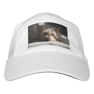 Yorkshire / silky terrier hat