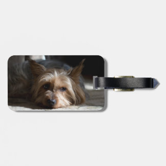 yorkshire / silky terrier luggage tag