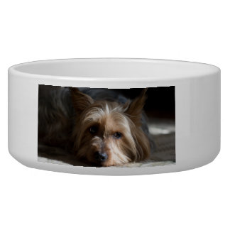 yorkshire / Silky terrier pet bowl