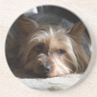 yorkshire / Silky Terrier sandstone coaster