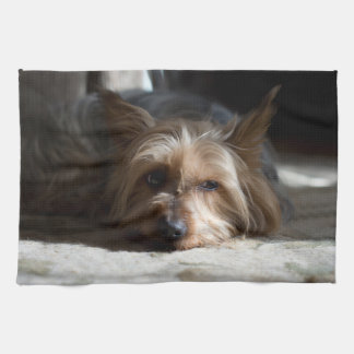 yorkshire / Silky Terrier towels