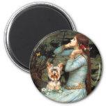 Yorkshire Terrier 17 - Ophelia Seated Fridge Magnet