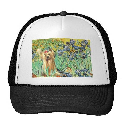 Yorkshire Terrier 1 - iris Gorros