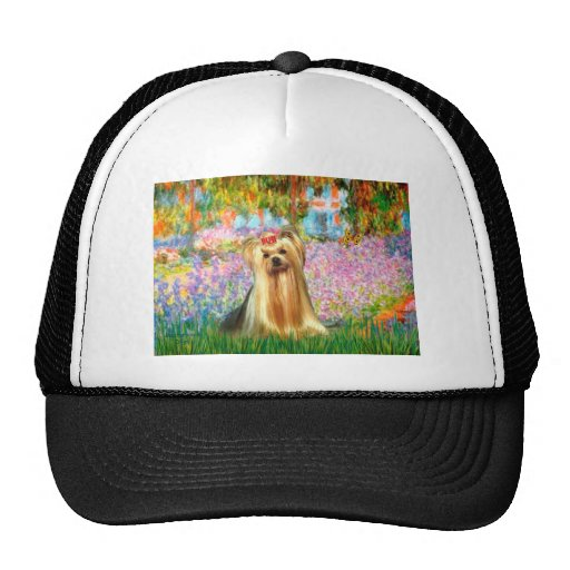 Yorkshire Terrier 1 - jardín Gorras