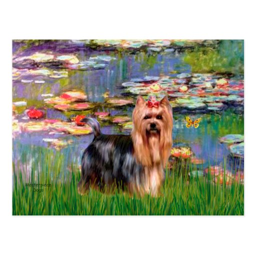 Yorkshire Terrier 9 - Lilies 2 Postcard