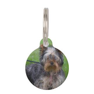 Yorkshire Terrier adorable Placa Para Mascotas