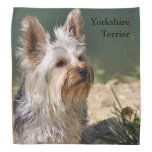 Yorkshire Terrier Bandana