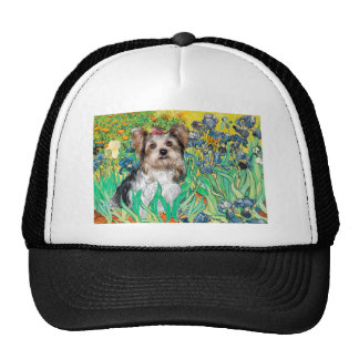 Yorkshire Terrier Biewer - Irises Hat
