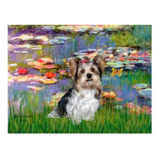 Yorkshire Terrier (Biewer) - Lilies 2 Postcard