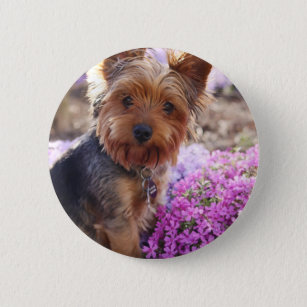 Yorkshire Terrier Button