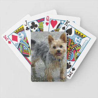 Yorkshire Terrier Cartas De Juego