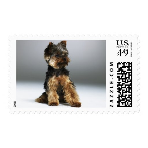 Yorkshire terrier, close-up postage stamp