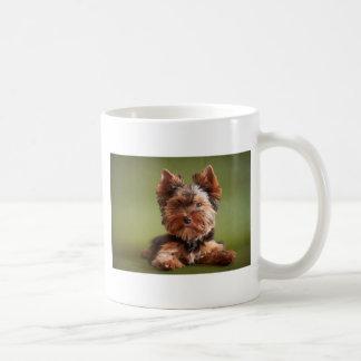 Yorkshire Terrier Coffee Mugs