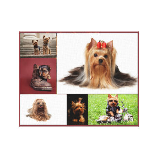 Yorkshire Terrier Collage Canvas Print