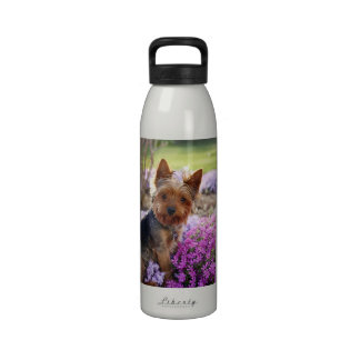 Yorkshire Terrier dog beautiful photo water bottle