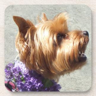 Yorkshire Terrier dog Beverage Coaster