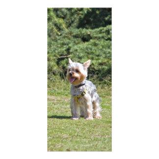 Yorkshire Terrier dog cue custom rack card